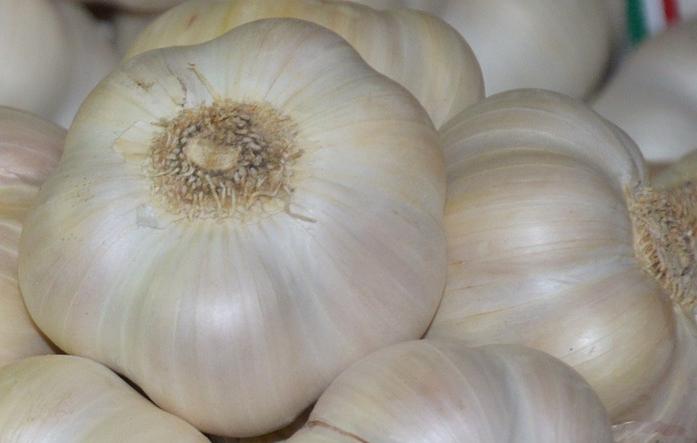 IGP Ail blanc de Lomagne, belles têtes bien remplies, tunique intacte et racines coupées ras