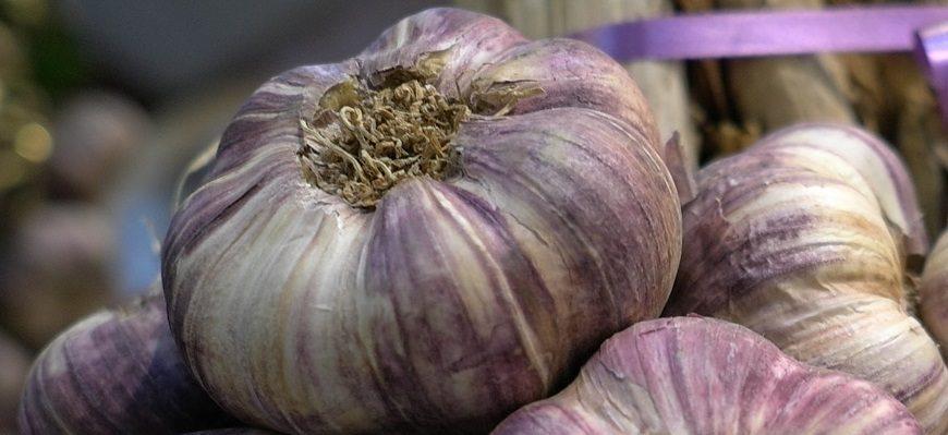 Ail violet de Cadours AOP, appellation d'origine protégée