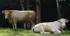 PDL_Boeuf-fermier-du-maine_280x120